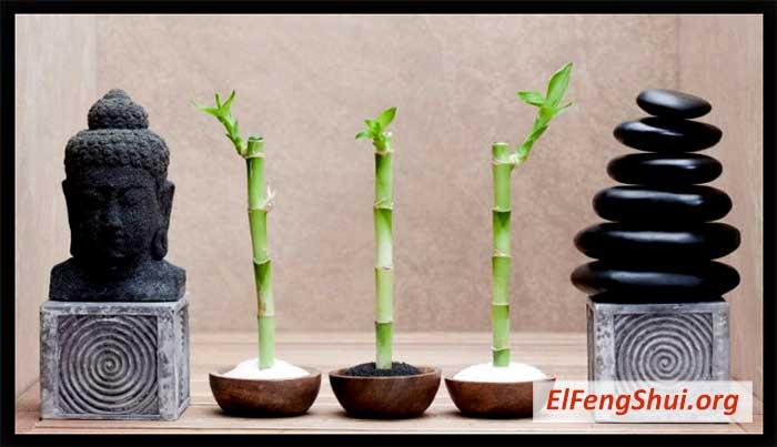 Segun el feng shui que plantas debo tener en casa for Plantas en casa segun feng shui
