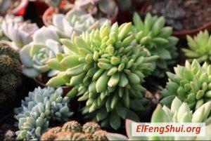 Segun el Feng Shui que Plantas Debo Tener en Casa