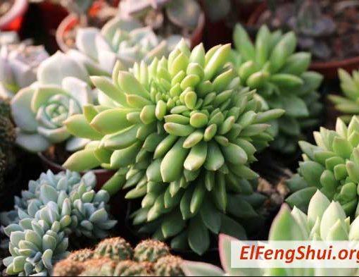 6 formas de usar lavanda para el buen feng shui for Plantas para tener en casa segun el feng shui
