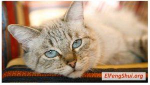El feng shui de los gatos en casa