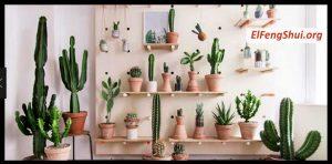 Todo acerca de los Cactus y su Significado Feng Shui