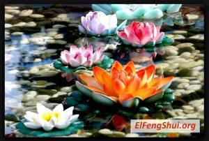 Flor de Loto Feng Shui Ubicación, Significado y Uso!