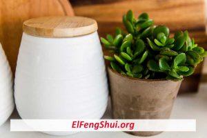 ¿Qué Plantas Atraen El Dinero Según El Feng Shui?